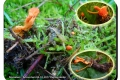 Koekelare - Arboretum 04-10-2017 Rupsendoder