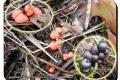 Koekelare - Arboretum 04-10-2017 Gewone boomwrat